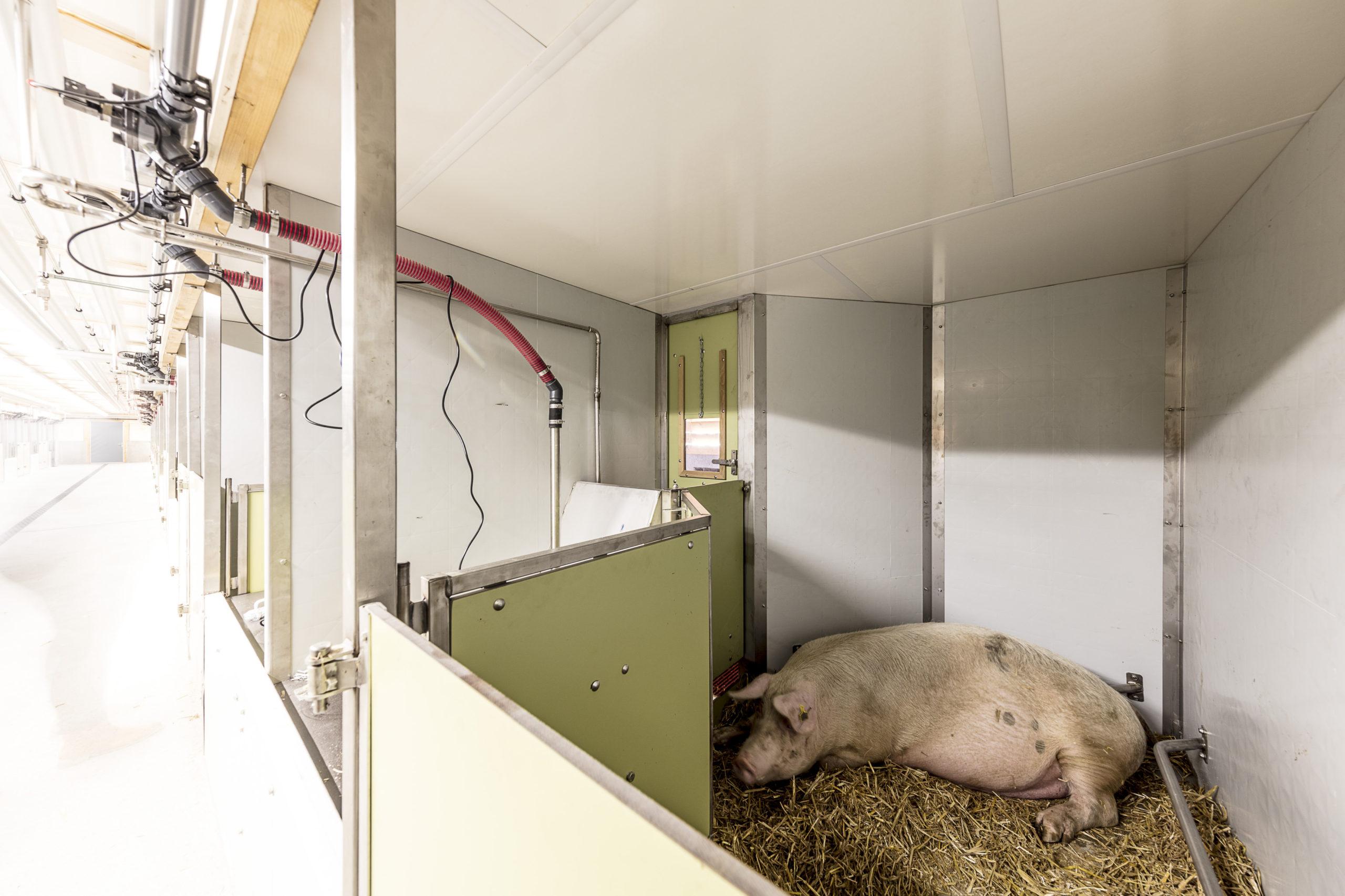 Schweinestall JVA Realta 2016